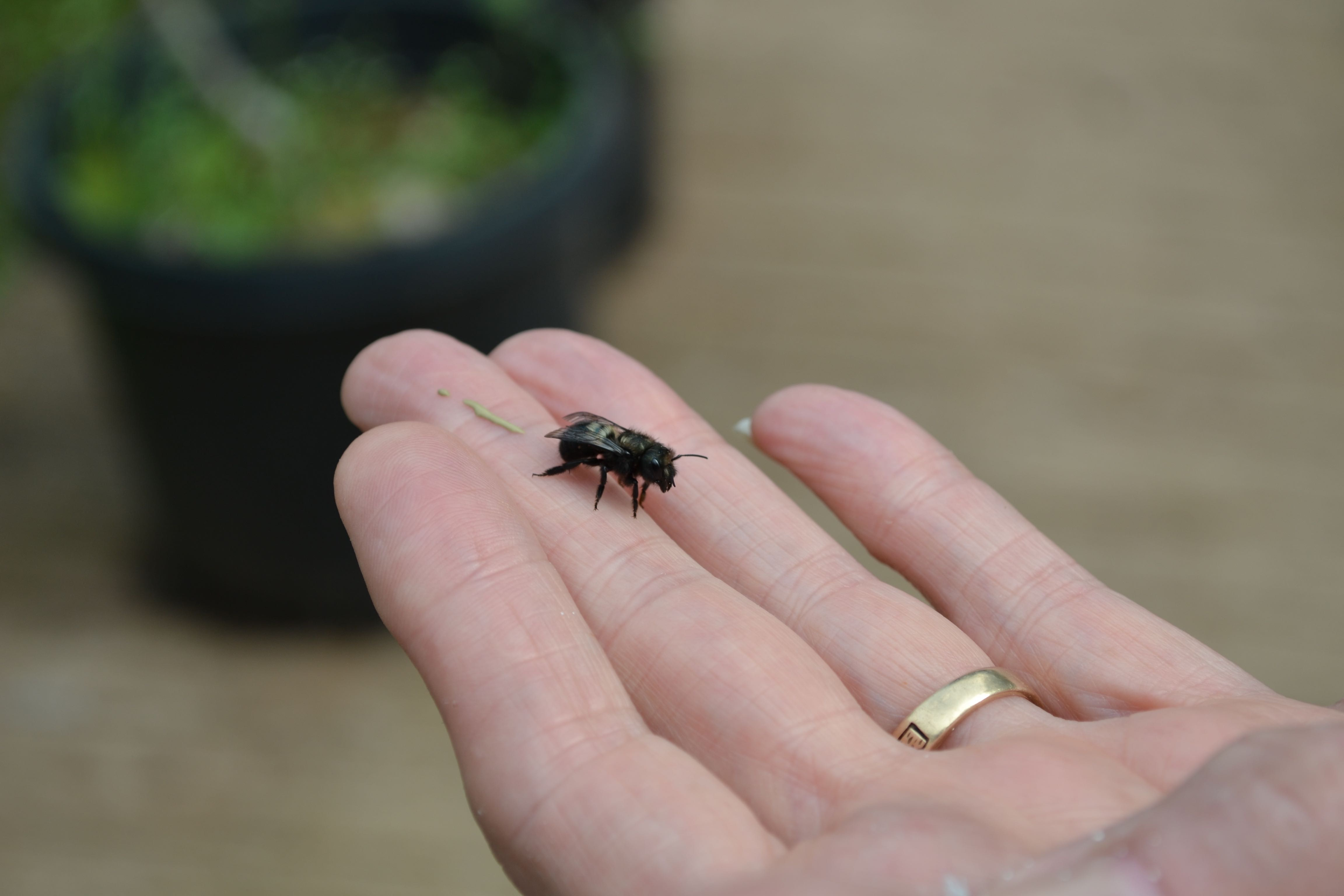 Bee on two fingers