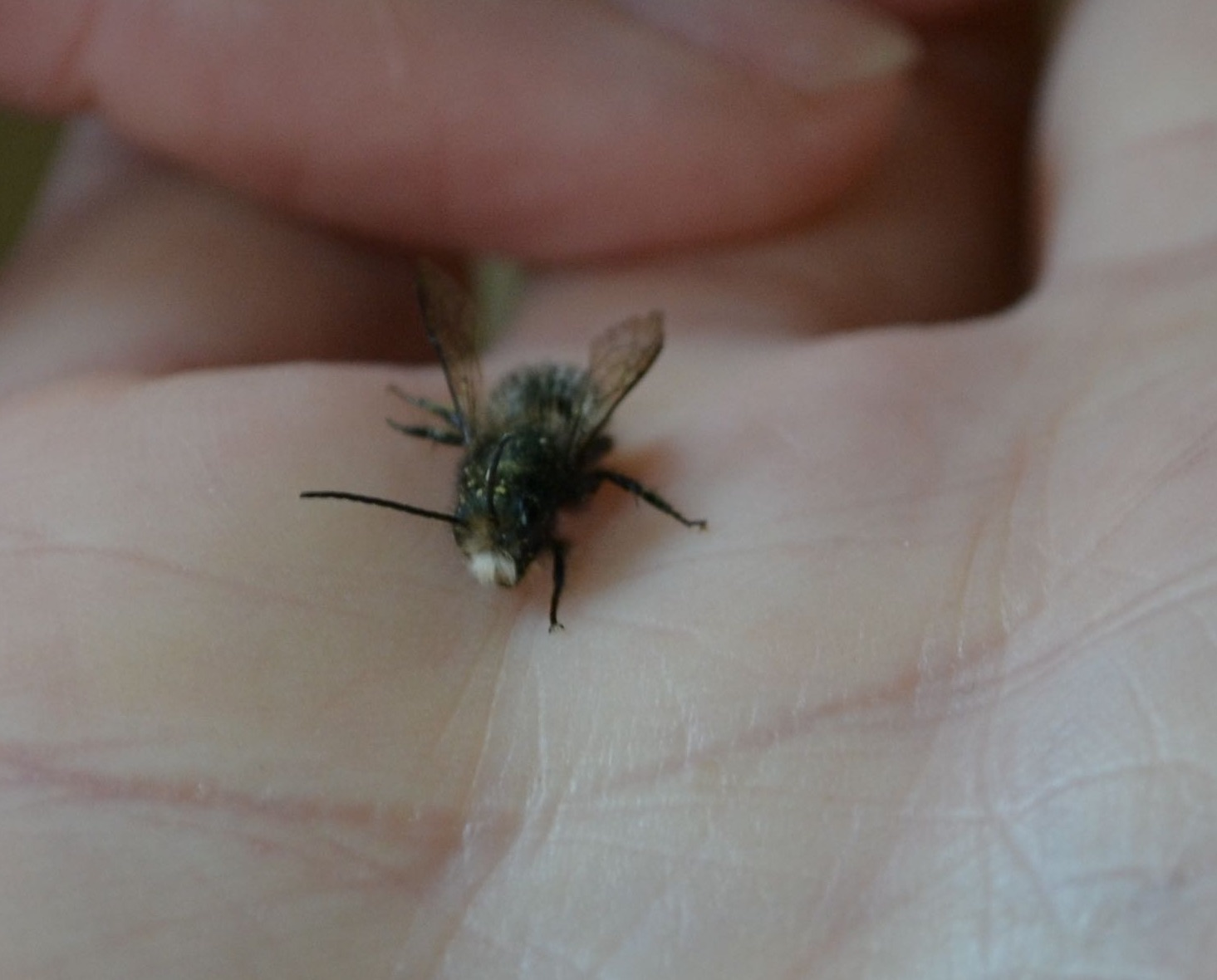 Boy bee up close